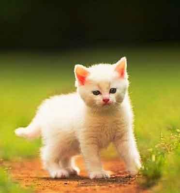 Cat Nice Whatsapp DP Images Pics Download