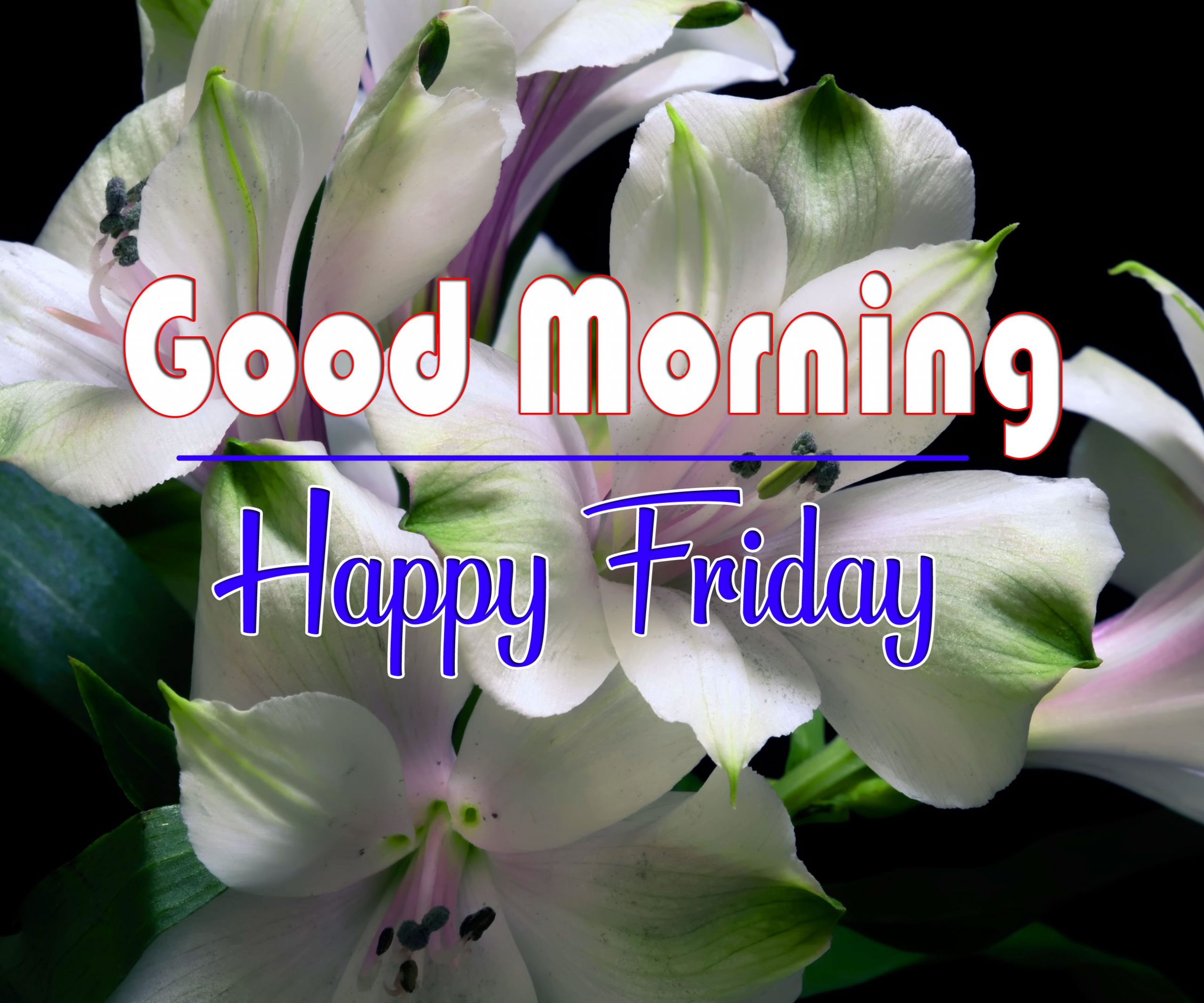 Free HD friday Good morning Wishes Images Download