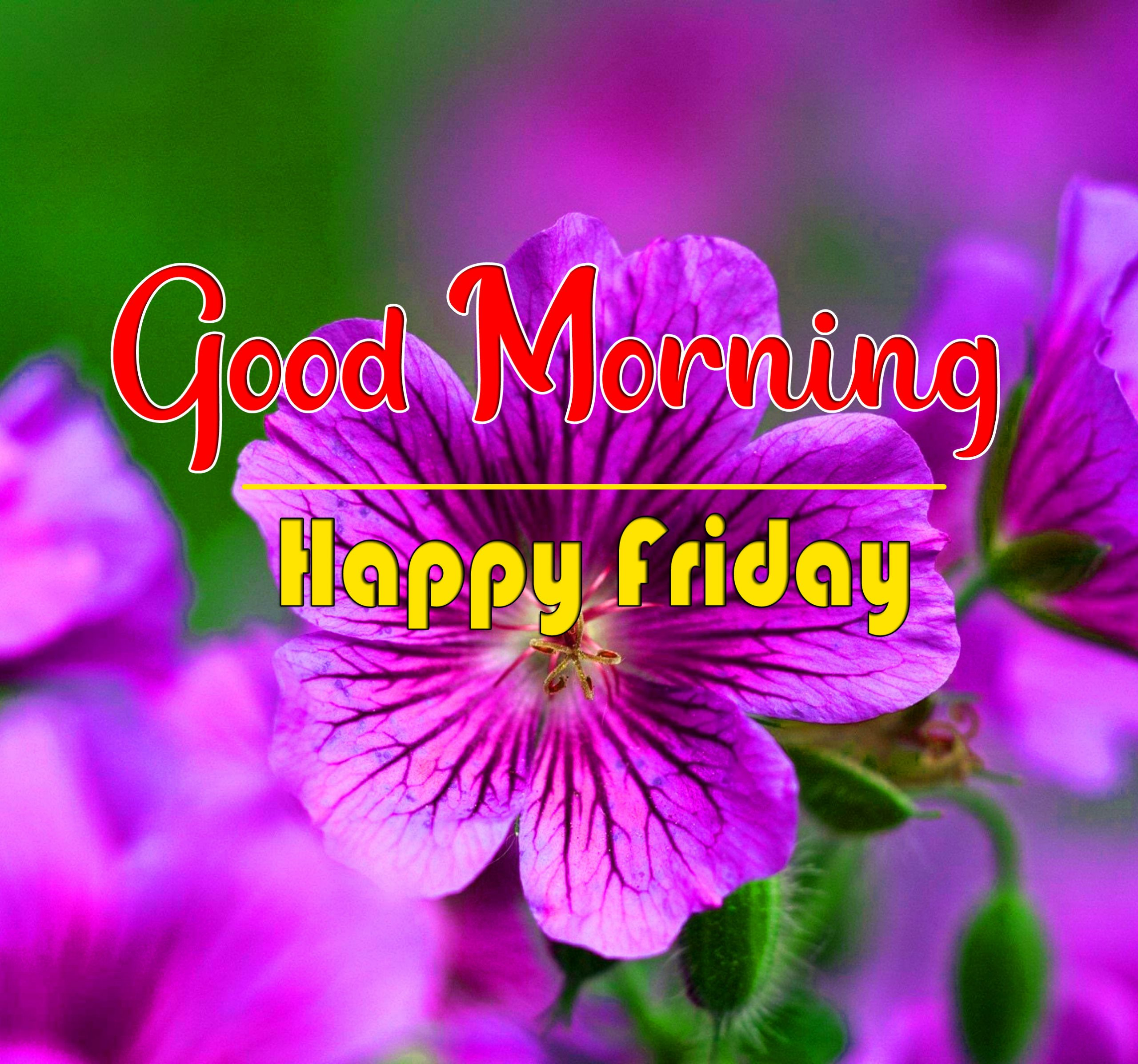 Free HD friday Good morning Wishes Wallpaper
