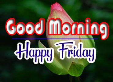 Free fresh friday Good morning Images