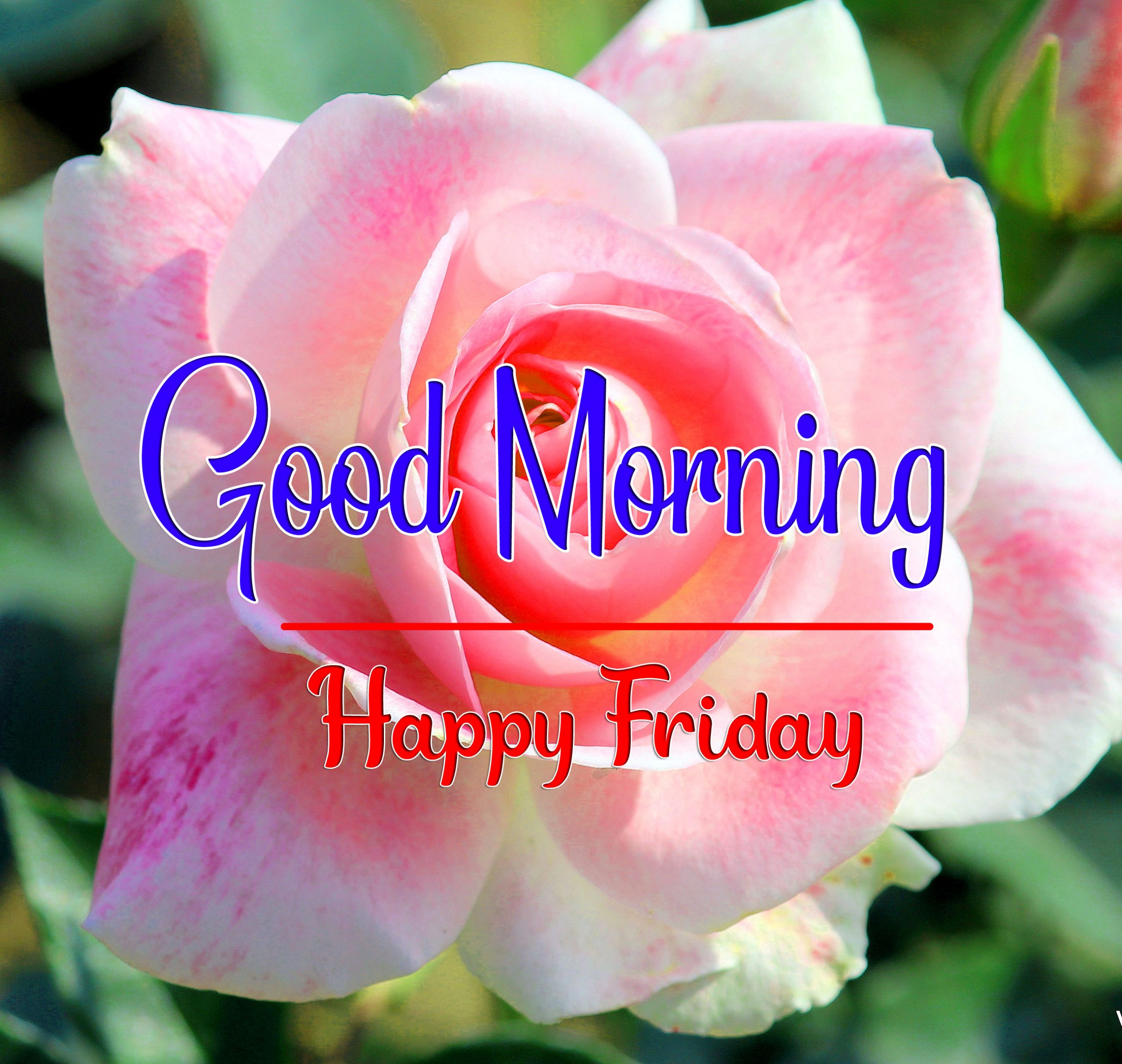 HD Top Quality friday Good morning Wishes Images Download