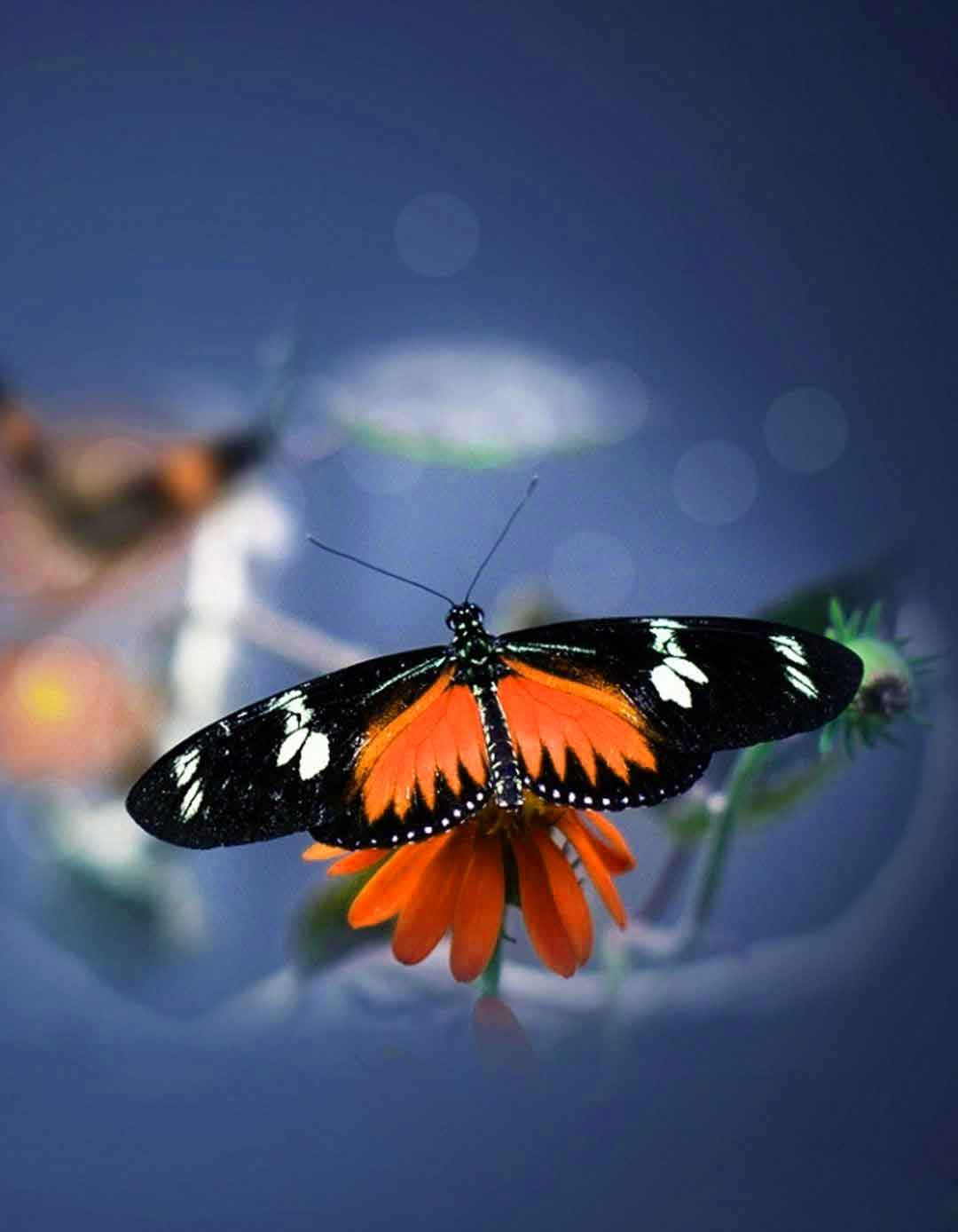 beautiful butterflies and f