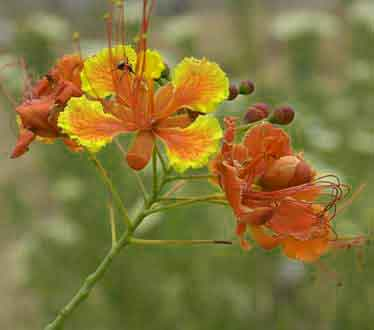 beautiful flower dp 1017