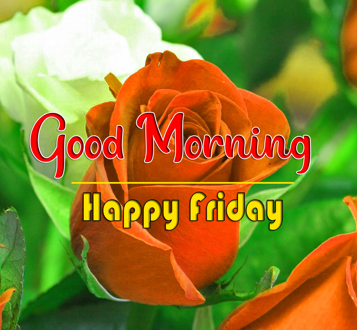friday Good morning Pics Pictures