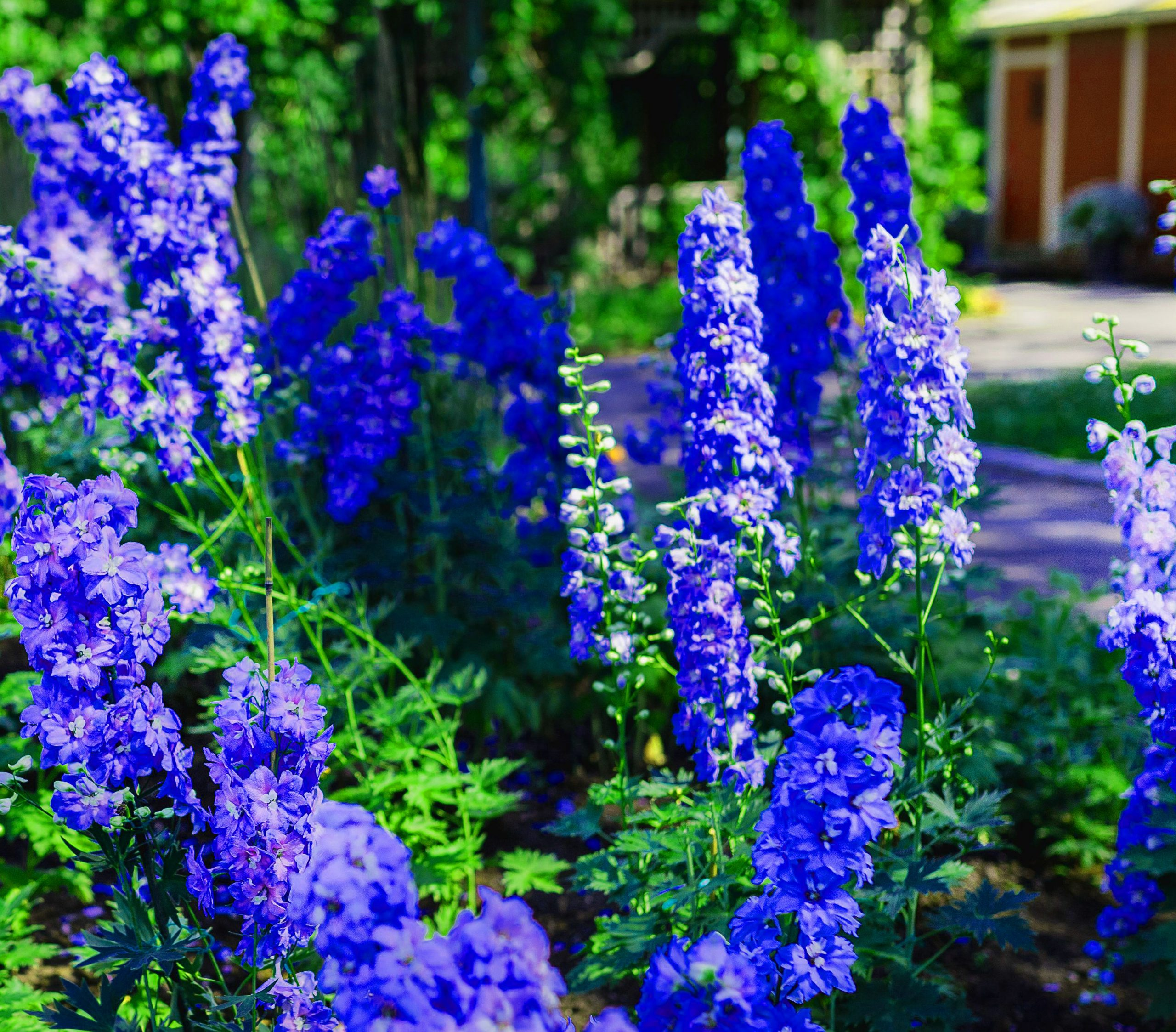 1080p Flower DP Pics
