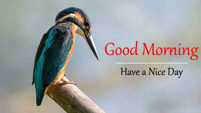 2021 Love Good Morning Images for Status