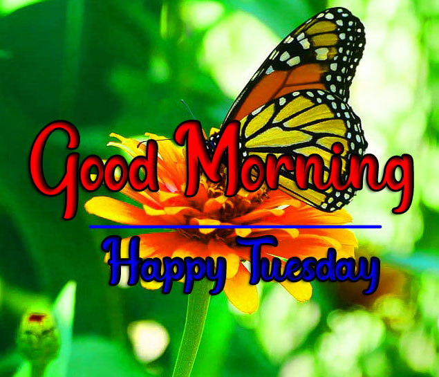 2021 Tuesday Good morning Images 1