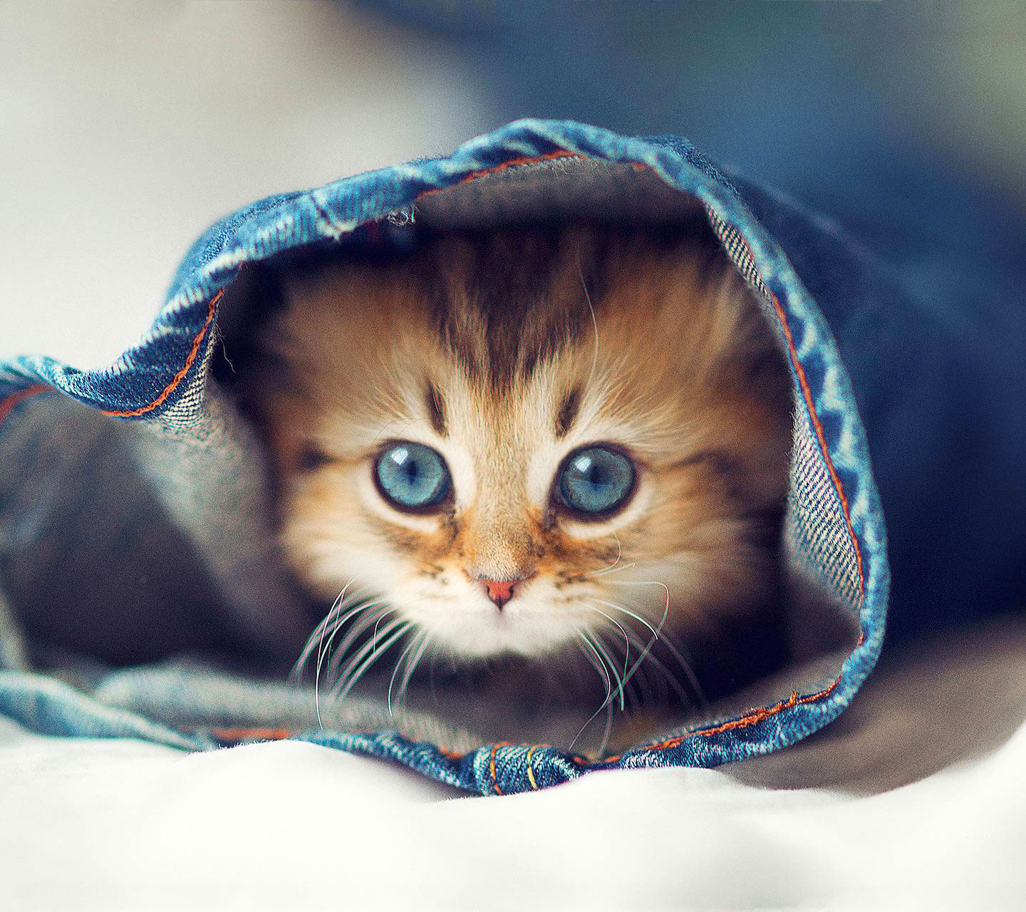 2021 cat Attractive Cute Whatsapp Dp Images
