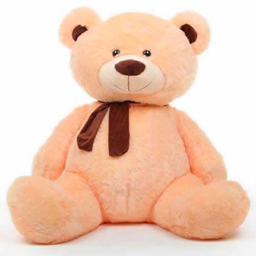 2021 teddy Superb Whatsapp Dp Images