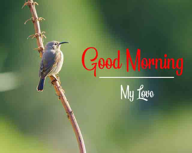 4k good morning Images With Bird