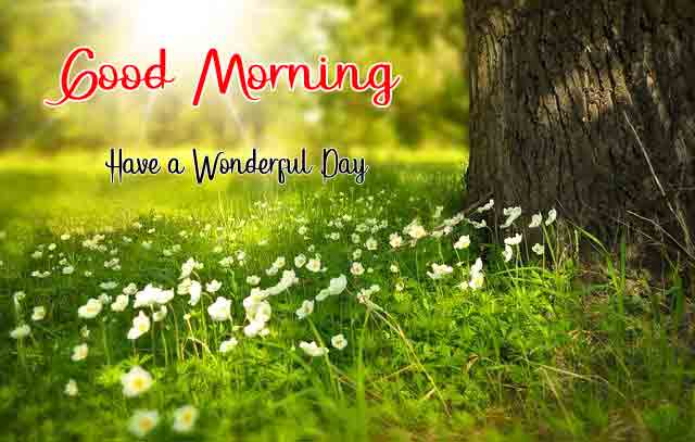 4k good morning Images With Nature
