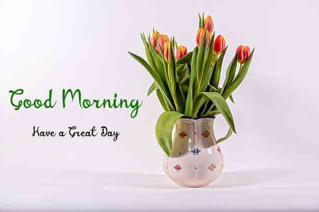 4k good morning Pics Photo