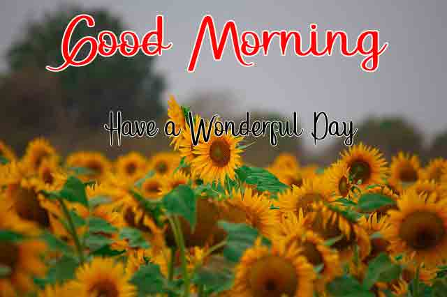 4k good morning Pics Pictures 2
