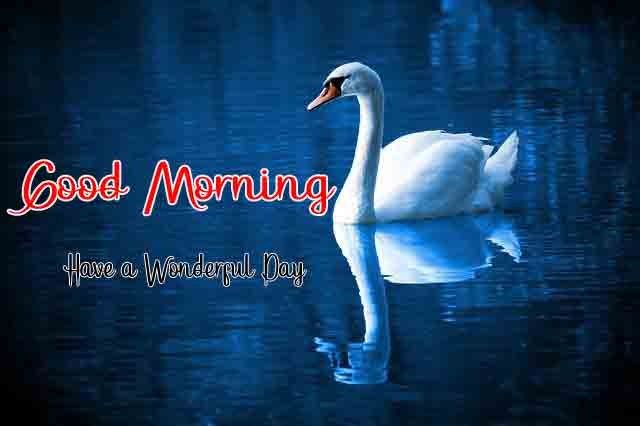 4k good morning Pics Pictures 3
