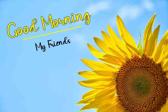 4k good morning Pics With Sunflower