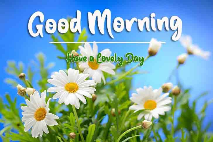 4k good morning Wallpaper With Flower
