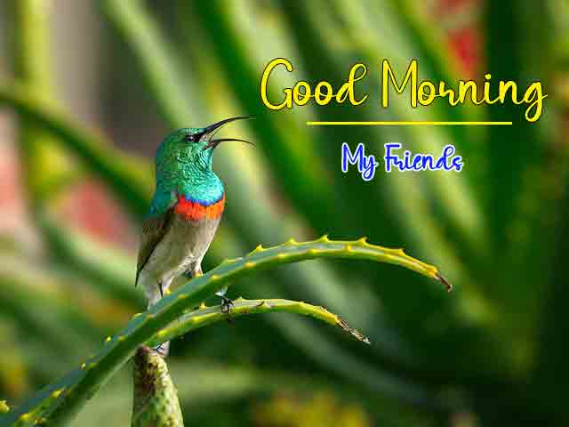 4k good morning
