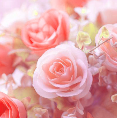 Beautiful Flower Images for Whatsapp DP Images With Rose