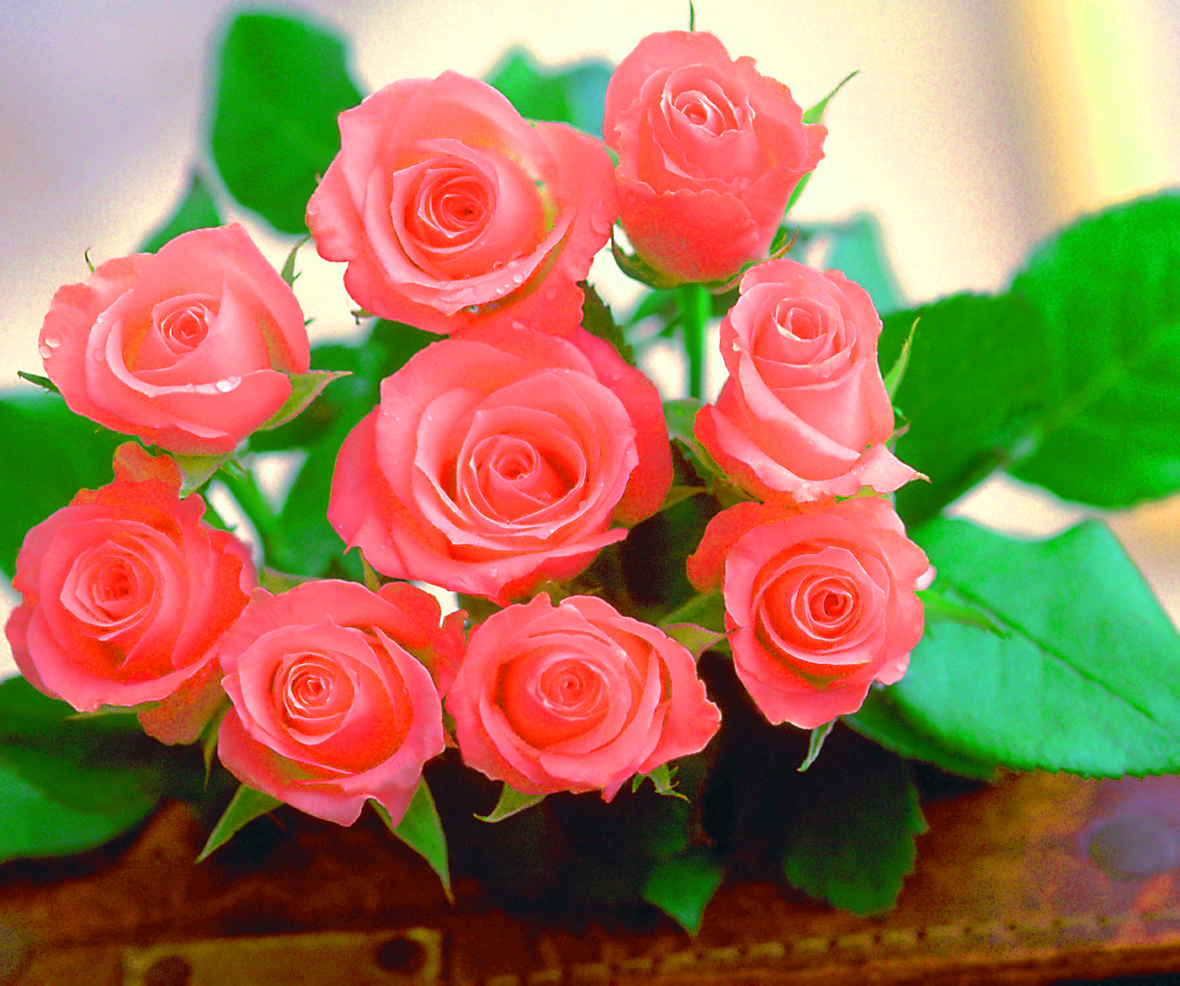 Beautiful Flower Images for Whatsapp DP Pics HD