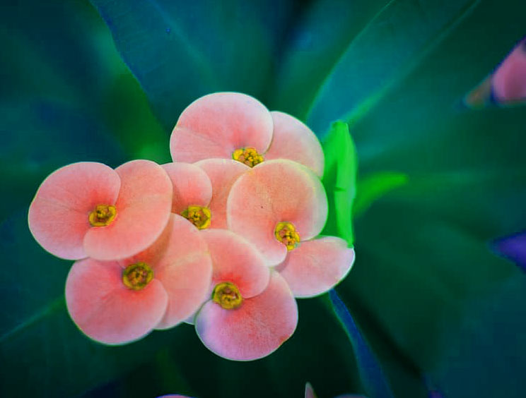 Beautiful Flower Images for Whatsapp DP Pictures