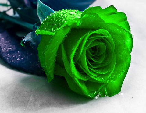 Beautiful Flower Images for Whatsapp DP Wallpaper for Status