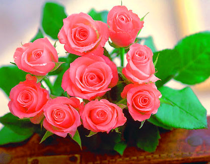 Beautiful Flower Images for Whatsapp DP