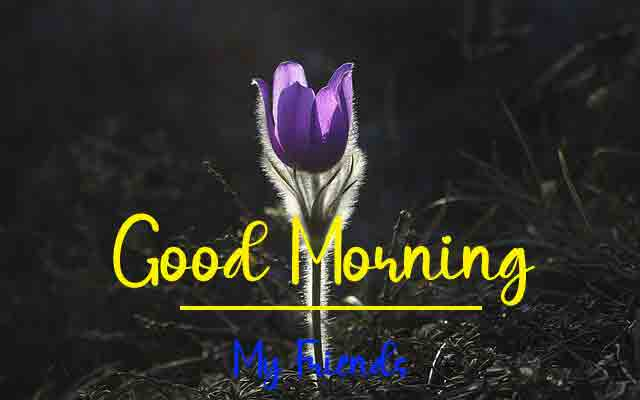 Beautiful Love Good Morning Pics Pictures