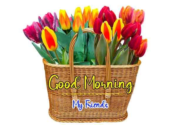 Beautiful Love Good Morning Pics