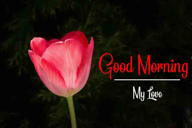 Beautiful Love Good Morning Wallpaper Free