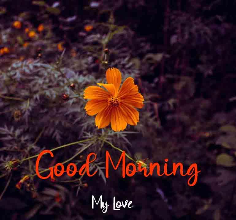 Beautiful Love Good Morning Wallpaper