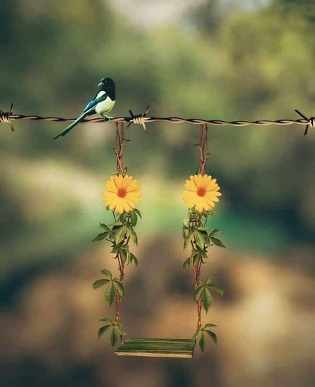 Beautiful Peaceful Whatsapp Dp Images pictures free hd 1