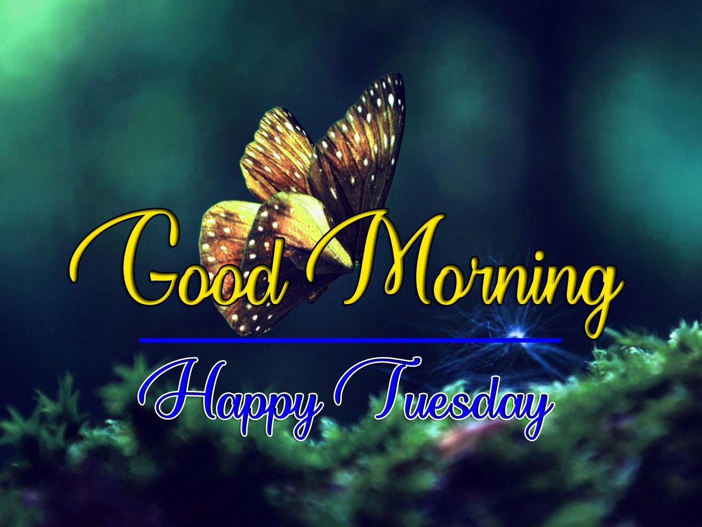 Beautiful Tuesday Good morning Pics Free 1
