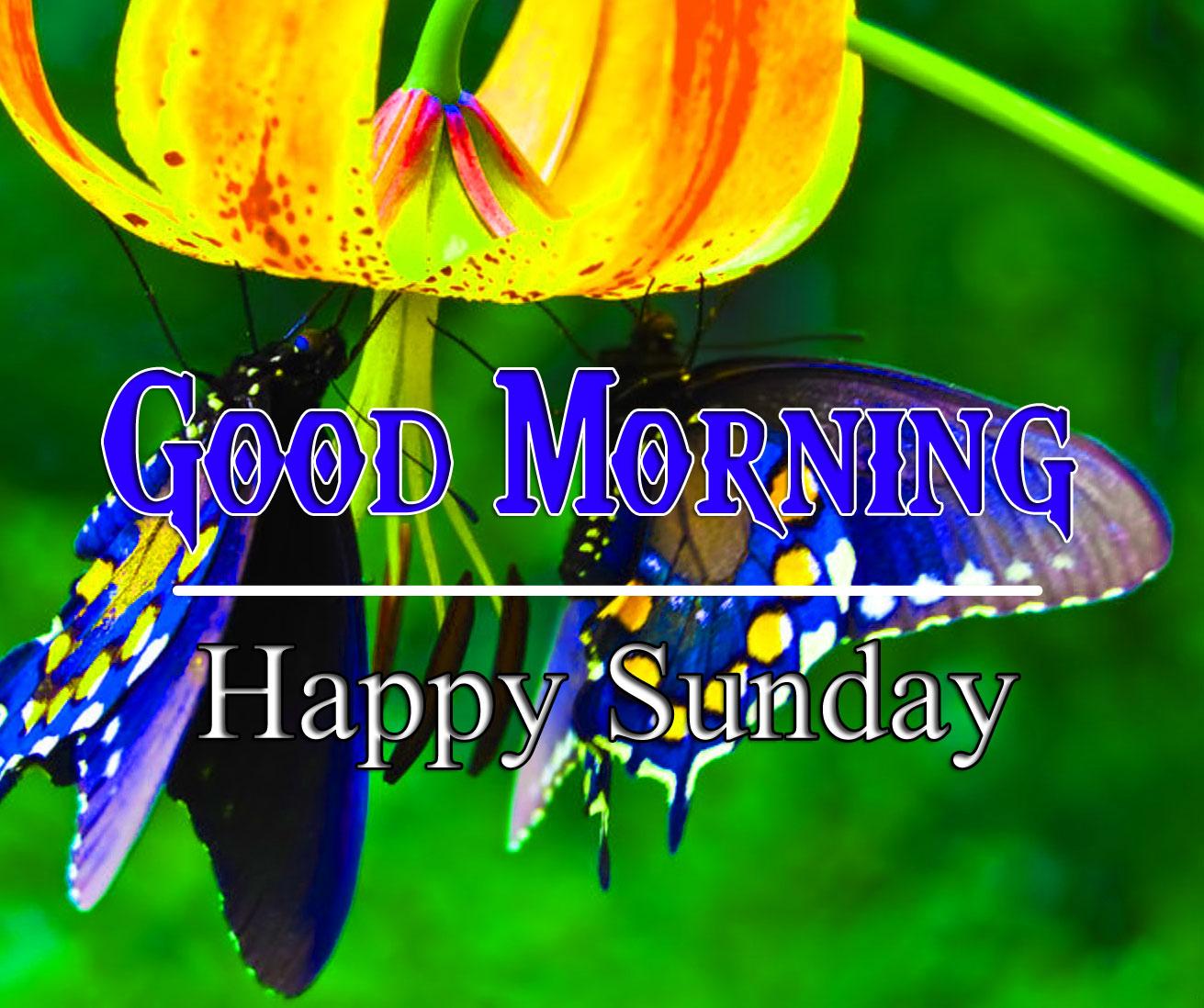 Beautiful Tuesday Good morning Pics HD 1