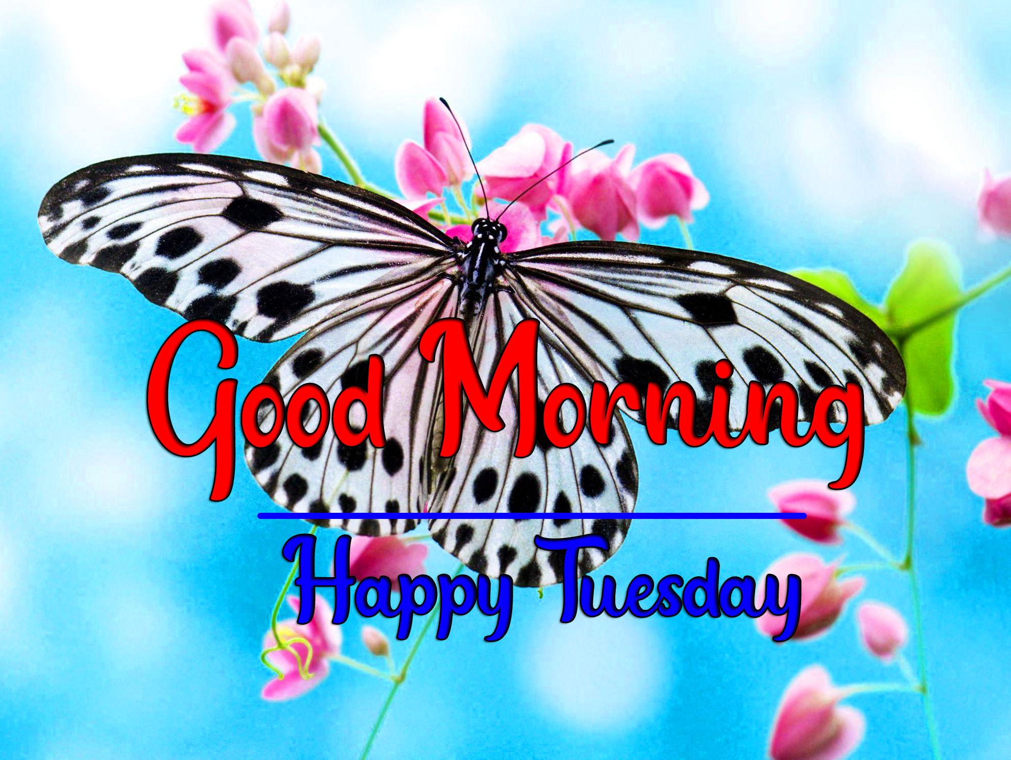 Beautiful Tuesday Good morning Wallpaper Free 3 1