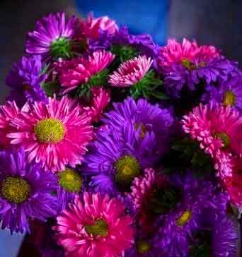 Best Dp For Whatsapp Wallpaper With Flower