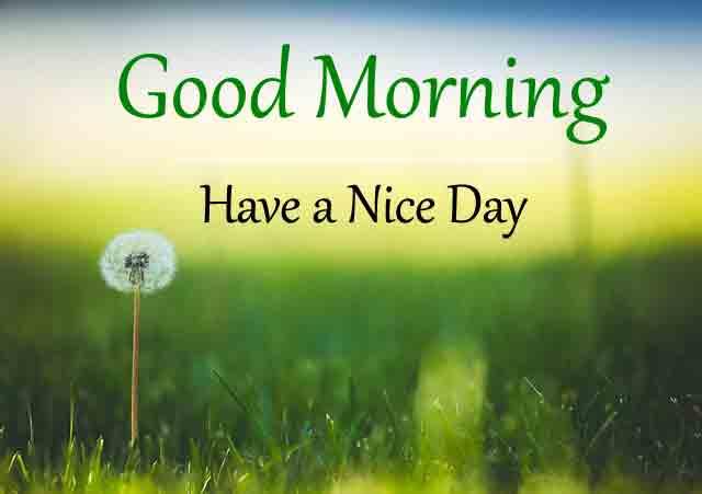 Best Free Good Morning Imaes