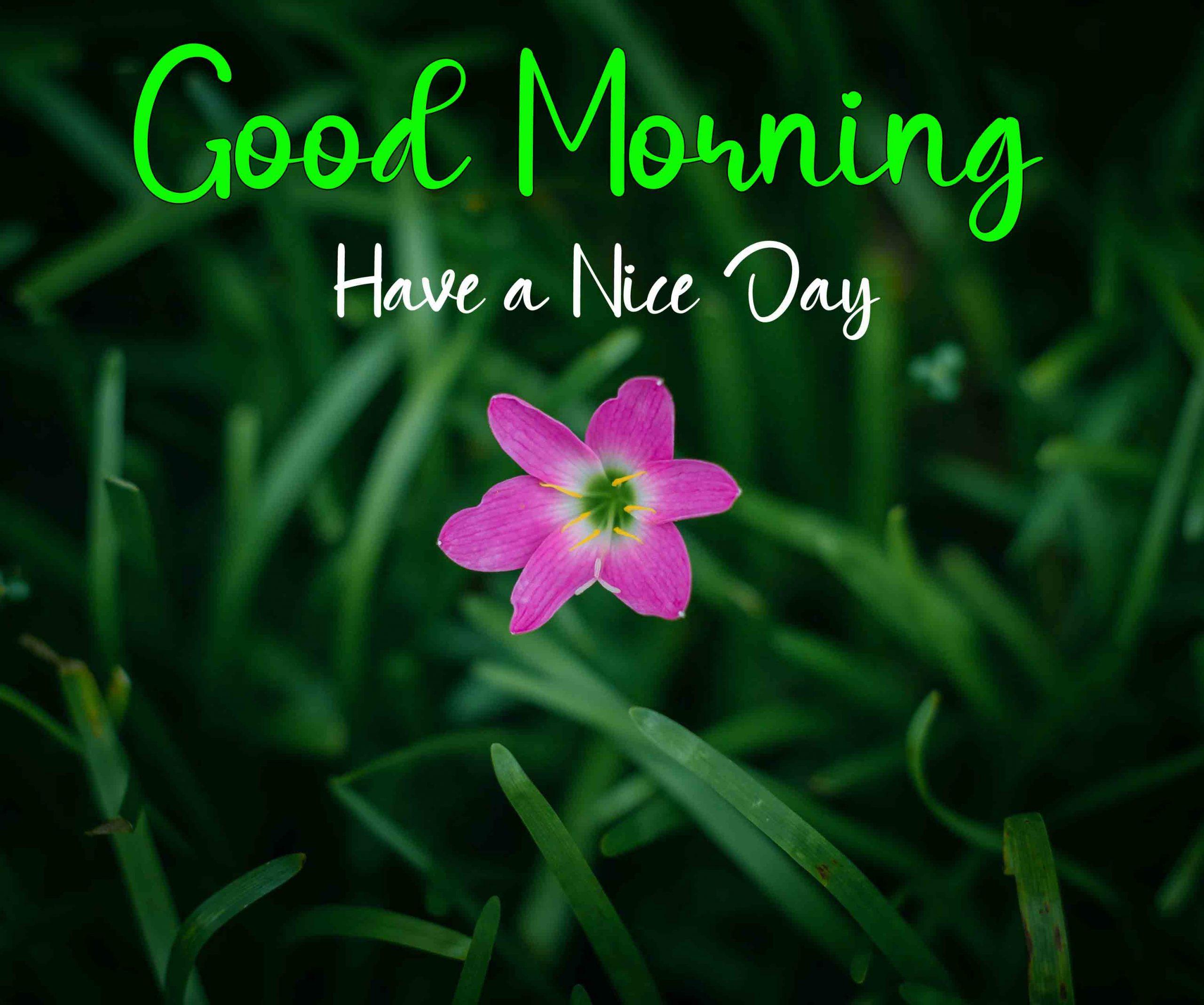 Best Friend HD Good Morning Dear Images