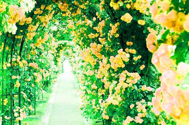 Best HD 1080p Flower DP Images