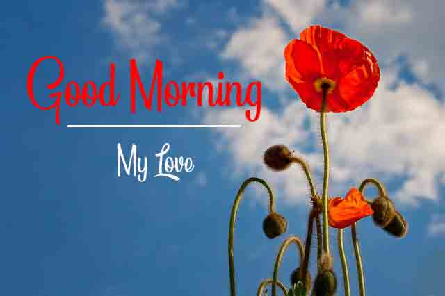 Best HD Beautiful Love Good Morning Images 2