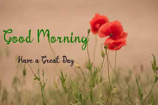 Best HD Beautiful Love Good Morning Photo