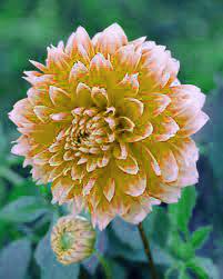 Best HD Flower DP Images 2