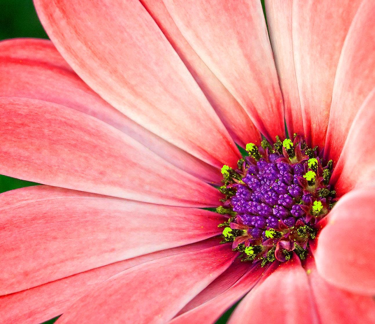 Best HD Flower DP Images