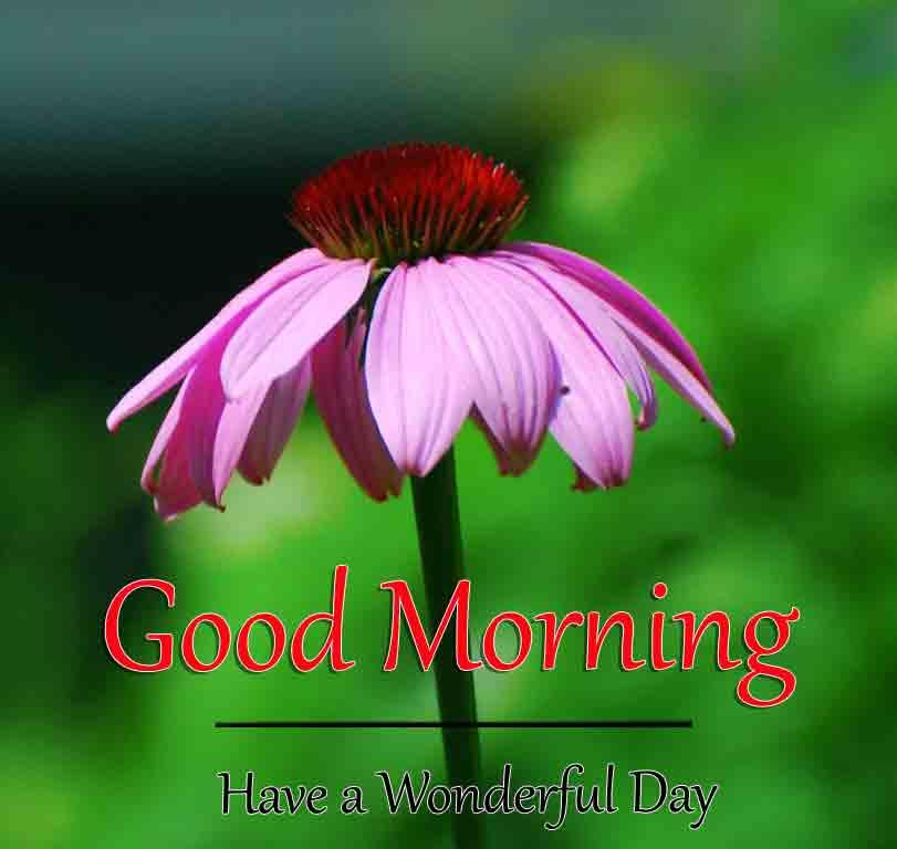 Best HD Good Morning Dear Images