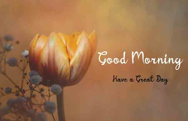 Best HD Good Morning Images 2021