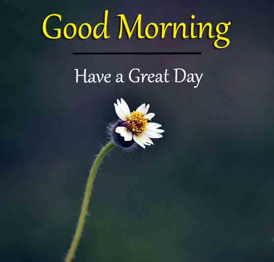 Best HD Good Morning Images