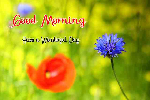 Best HD Love Good Morning Images