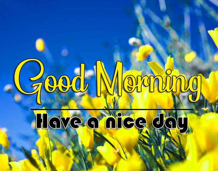 Best HD good morning Whatsapp dp Images