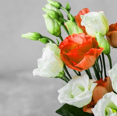 Best New Flower DP Images