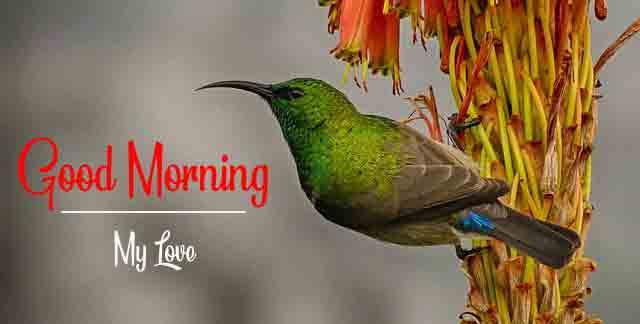 Best Quality 4k good morning Images