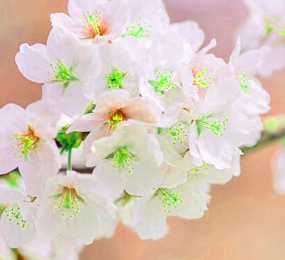 Best Quality Beautiful Flower Images for Whatsapp DP Images 3